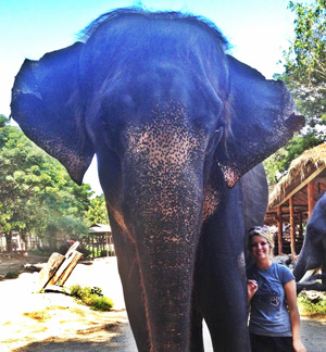 Elephant Project Volunteering Solutions