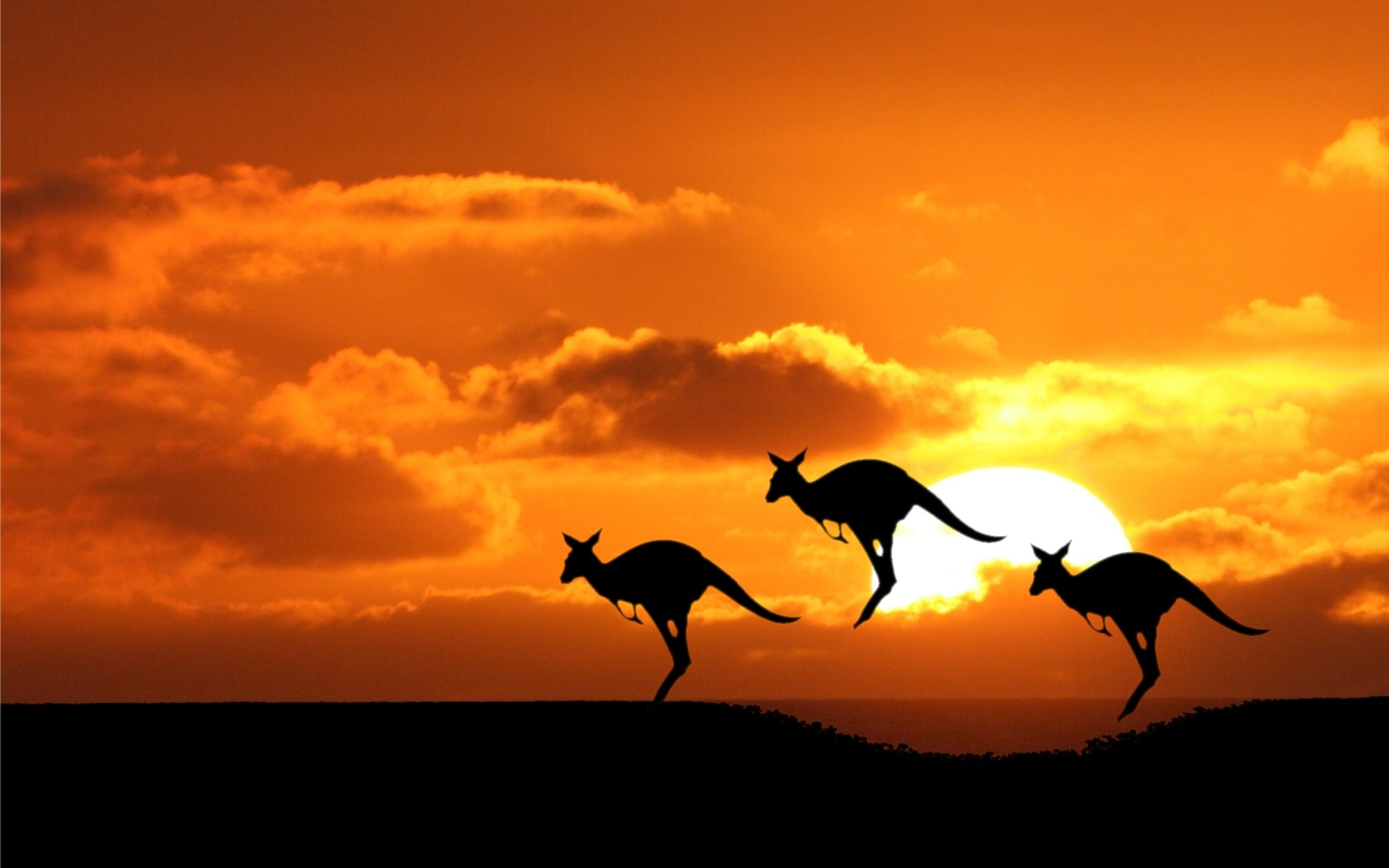 Things To Do In Australia While Volunteering