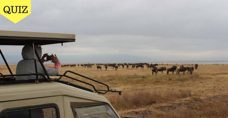 Quiz: Where Should You Volunteer In Africa in 2020?