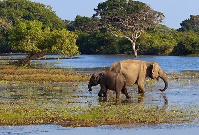 volunteer with elephants in asia