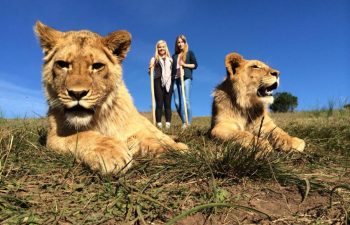 Benefits of Wildlife Conservation Volunteering in South Africa