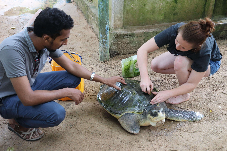 turtle conservation sri lanka